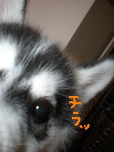 2010_0701_141333p7010012