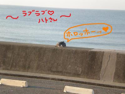 2010_1003_061807pa030010