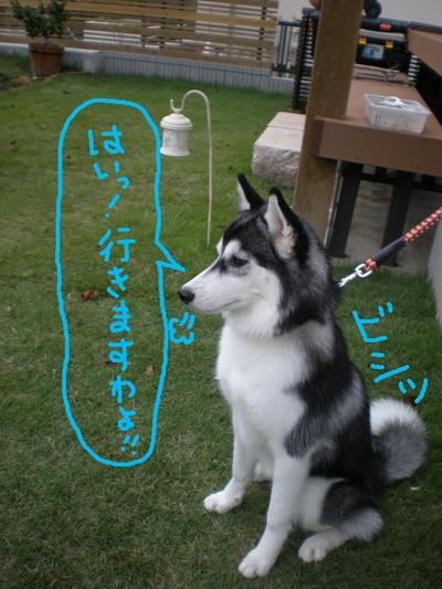 2010_1007_162631pa070001