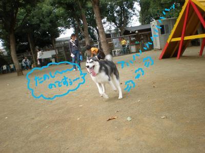 2010_1017_100242pa170117