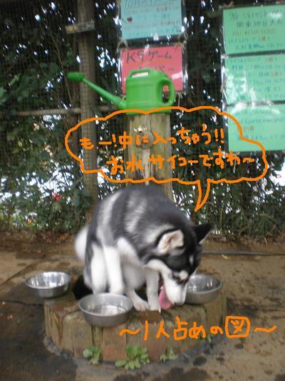 2010_1017_102705pa170126