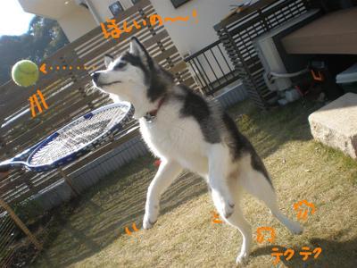 2010_1128_110647pb280329