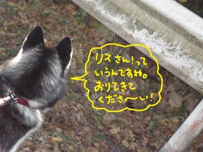 2010_1204_073709pc040022