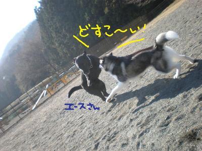 2010_1212_113019pc120063