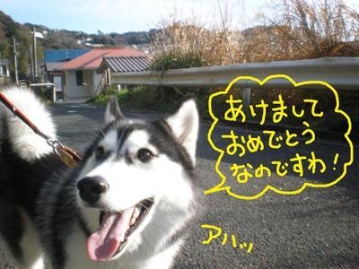 2011_0103_091356p1030080