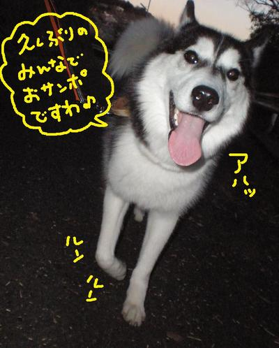 2011_0110_163058p1100019