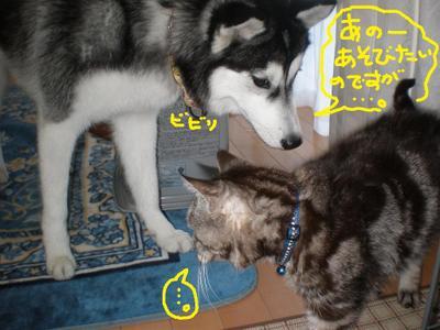 2011_0102_151230p1020073
