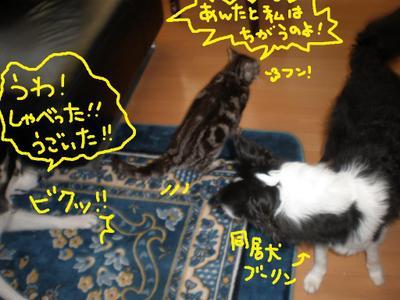 2011_0102_151258p1020074