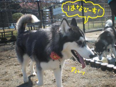 2011_0326_091449p3260004_4