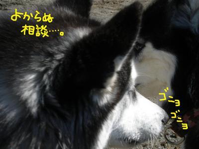 2011_0326_095151p3260021