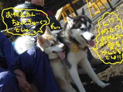 2011_0326_112151p3260066