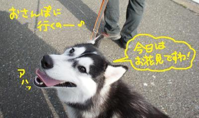 2011_0410_074641dsc00073