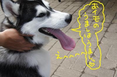 2011_0416_102323dsc00191