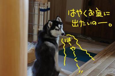 2011_0421_165144dsc00278