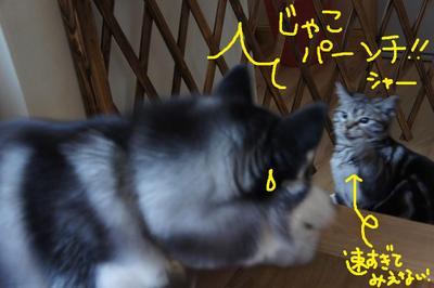 2011_0510_163227dsc00892