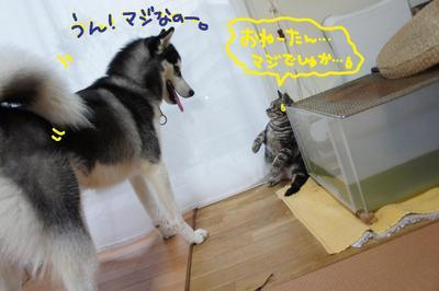 2011_0510_171802dsc01046_2