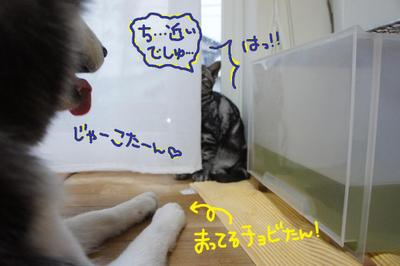 2011_0510_172236dsc01167