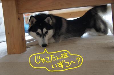 2011_0524_110639dsc01530