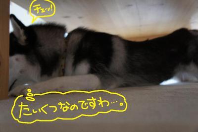 2011_0524_110650dsc01532