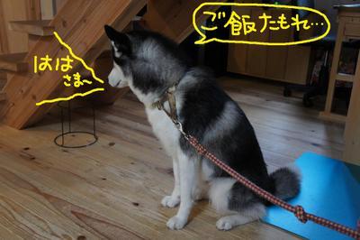 2011_0602_055448dsc01619
