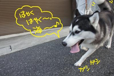 2011_0604_052538dsc01655_2