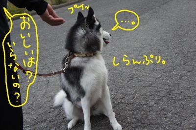 2011_0607_044907dsc01736