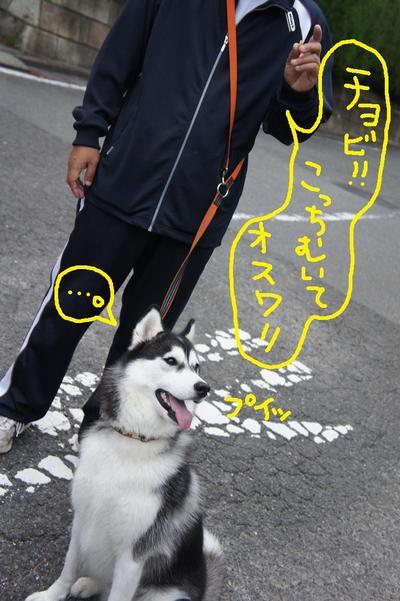 2011_0607_045057dsc01740
