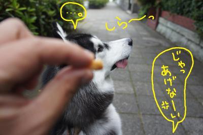2011_0607_045459dsc01747