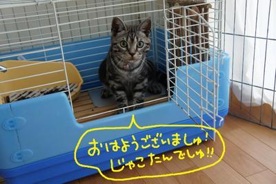 2011_0720_081352dsc03257