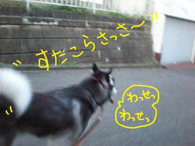 2011_0819_050021p8190012