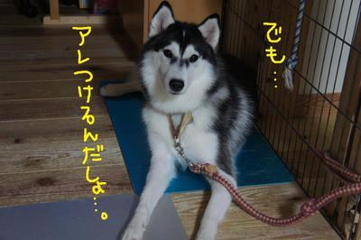 2011_0823_051130dsc03698