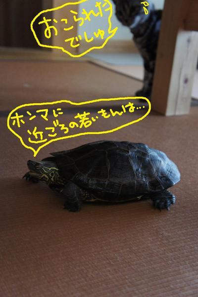 2011_0815_170025dsc03601