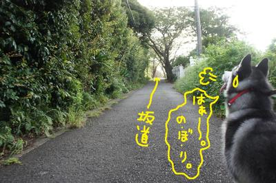 2011_0904_060449dsc03945
