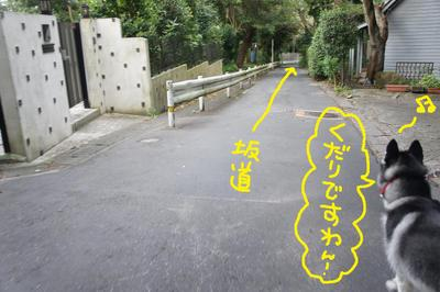 2011_0904_061157dsc03952