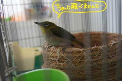 2011_0912_083100dsc04013