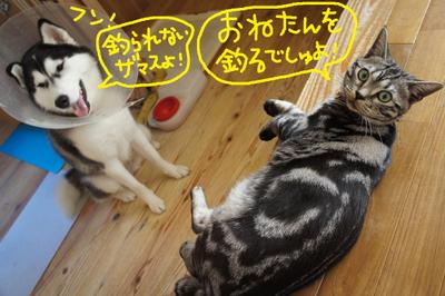 2011_0924_070059dsc04107_2