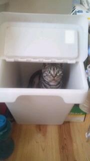 ごみ箱♪なぅ
