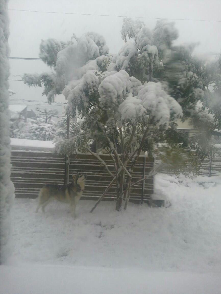 雪だったね〜!